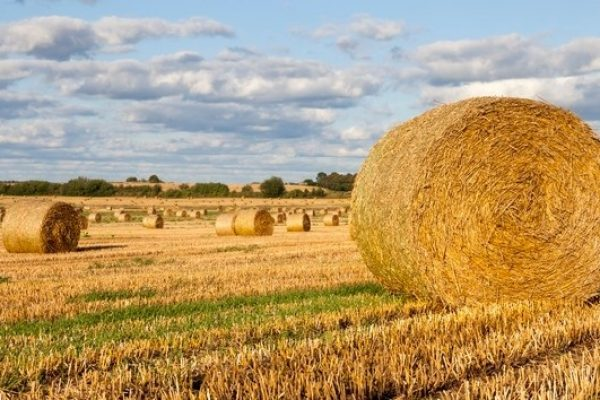 round-cylindrical-stacks-straw-left-farm-field-after-harvesting-cereals_252085-2517